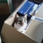 Rilla schaut sich schon mal die bestellten Katzenklappen genauer an.