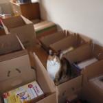 Lucy hilft beim Einpacken. Jedenfalls psychologisch. Jeder Karton wird inspiziert!